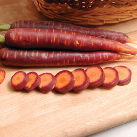 Purple Haze Main Crop Carrots