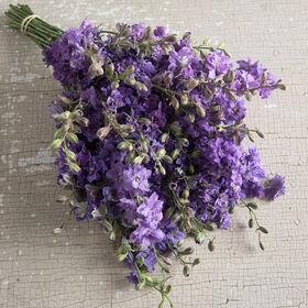 气™淡紫色燕草属植物