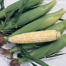 Trinity Sweet Corn