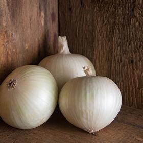 Sierra Blanca Full-Size Onions