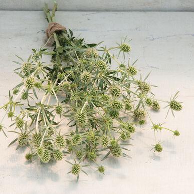 White Glitter Eryngium