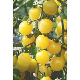White Cherry