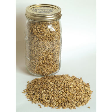 Barley (Robust)