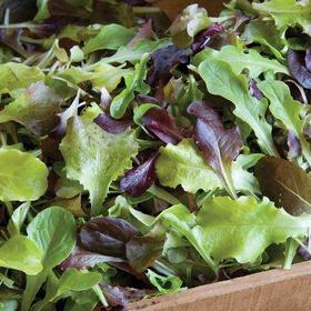 Allstar Gourmet Lettuce Mix Lettuce Mixes