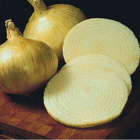 Onion Plants & Onion Sets | Johnny's Selected Seeds