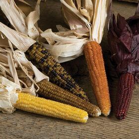 微型彩色爆米花玉米干燥
