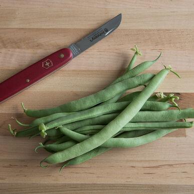 E-Z Pick Bush Beans
