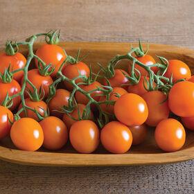 克莱门泰鸡尾酒西红柿