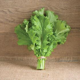 绿色浪潮芥菜