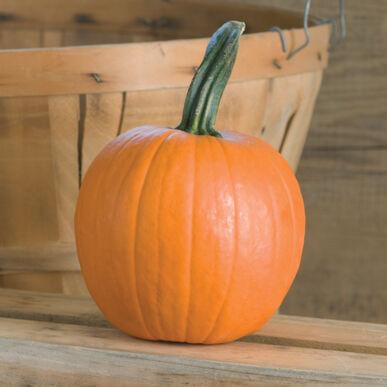 Chucky Specialty Pumpkins