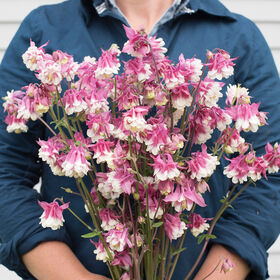 Pink Petticoat Columbine