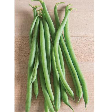 Jade II Bush Beans