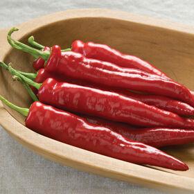 Cheyenne Hot Peppers