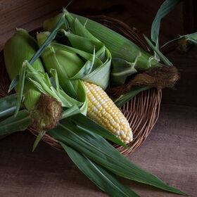 美国梦甜玉米
