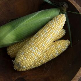 迷人的甜玉米