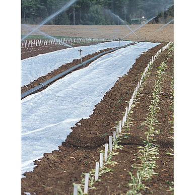 "Agribon+ AG-19 Row Cover - 83"" x 250'"