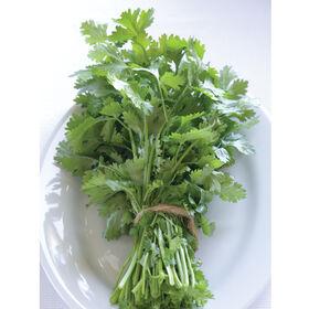 圣Monogerm芫荽(香菜)