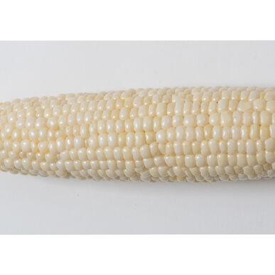 Illusion Sweet Corn