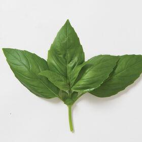 Aroma 2 Pesto Basil