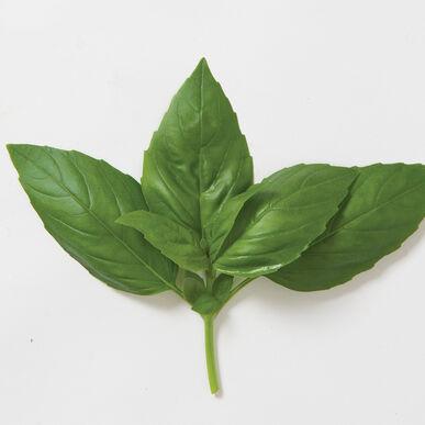 Aroma 2