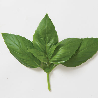Aroma 2 Genovese Basil