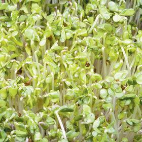 西兰花微绿蔬菜betway体育投注