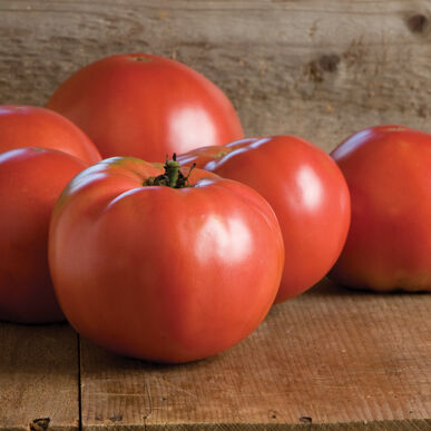 Martha Washington Beefsteak Tomatoes