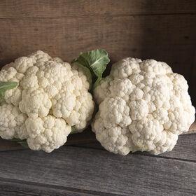 Mardi Standard Cauliflower