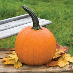 Fall Splendor Specialty Pumpkins