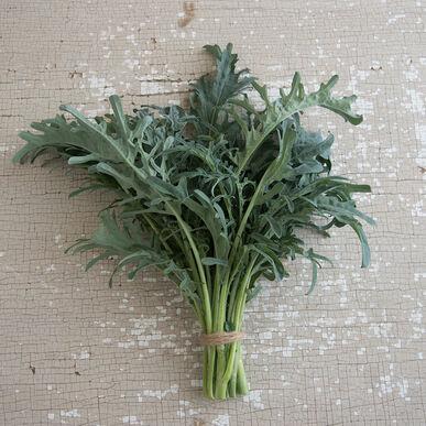 Spigariello Riccia Leaf Broccoli