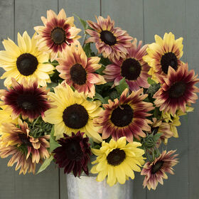Strawberry Lemonade Mix Tall, Branching Sunflowers