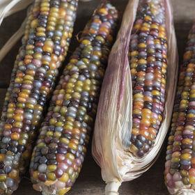玻璃宝石干玉米