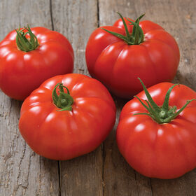 Marbonne Tomatoes