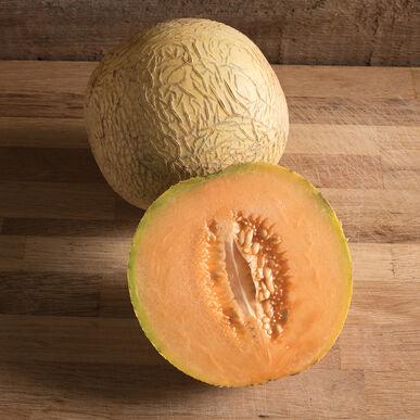 Divergent Cantaloupe (Muskmelon)