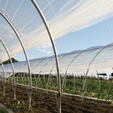 Tufflite IV™ Greenhouse Film - 28' x 150'.