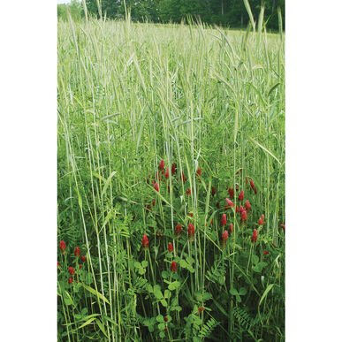 Fall Green Manure Mix