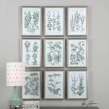 Uttermost Herb Garden Prints, S/9