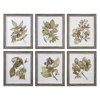 Uttermost Seedlings Framed Prints S/6