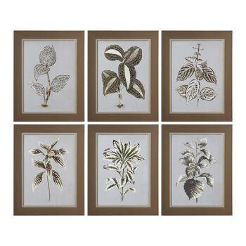 Uttermost Verigated Plant Prints S/6