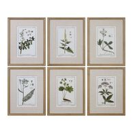 Uttermost Green Floral Botanical Study Prints S/6