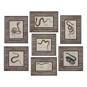 Uttermost Snakes Under Glass Prints S/7