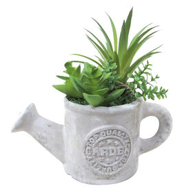 Garden Succulent in Stone Water Pale- 5-in