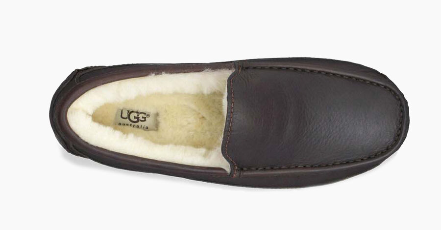 Ascot - Leather