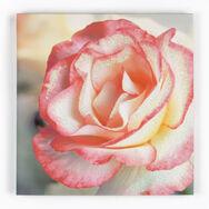 Pétale rose Rose avec Éclat Toiles imprimées, , large