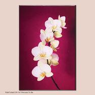 Orchidée – Fuchsia, , large