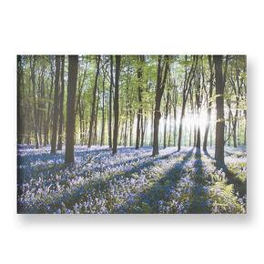 Bluebell Landscape Printed Canvas, , large
