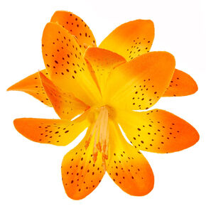Spotted Orange Double Lily Flower Hair Clip,