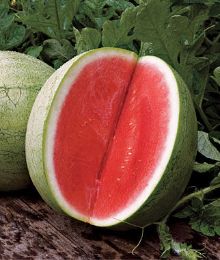 Watermelon Seedless, Big Tasty Hybrid 1 Pkt. (10 seeds)