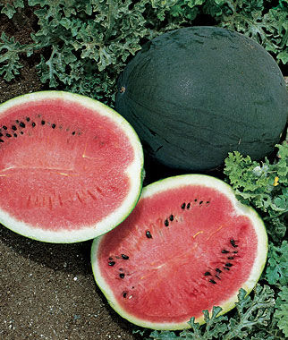 Watermelon, Bush Sugar Baby 1 Pkt. (25 seeds)