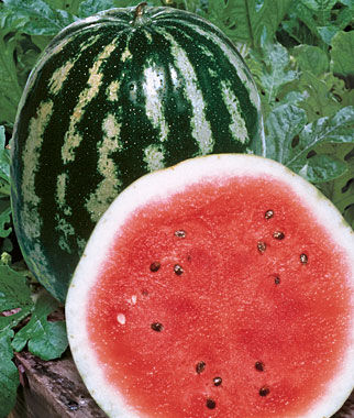 Watermelon, Crimson Sweet 1 Pkt. (50 seeds)
